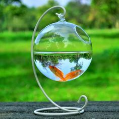 Hanging Glass Aquarium Fish Bowl