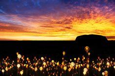 おすすめイベント【Field of Light フィールド オブ ライト ~ウルルを彩る光イルミネーション】 - オリジナルオーダーメイドツアー