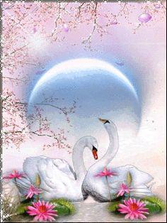 <3 Swans <3
