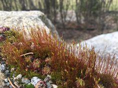 Kivisen Vilman piha: Keväisellä kotipihalla