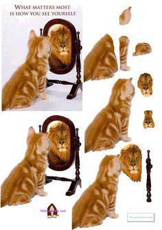 .Cat & lion card