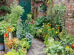 Pots and Crops Create Productive Patio