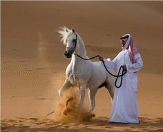 The Arabian horse is one of the oldest breeds in the world, with intelligence, speed, endurance, adaptability and floating grace... the AUTHENTIC Arabian horse!