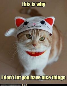 hehe...I would NEVER put a cat costume on our cats...no, I'd go the classy route and dress them in kitty tuxedos with kitty monocles and kitty top hat. ;)