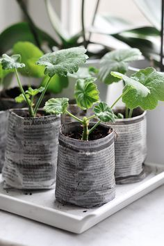 Turn old newspaper into seedling pots. They can be planted directly into the ground as the paper will eventually biodegrade. You can form them by wrapping the paper around a jamjar or similar, or there are 'devices' that can be bought to make the pots. I think using the gardening supplement that comes with the weekend papers would be quite a nice touch :D