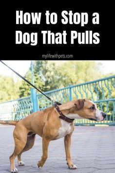 Dog Training Techniques, Dog Training Videos, Best Dog Training, Obedience Training For Dogs, Pitbull Training, Therapy Dog Training, Therapy Dogs, Dog Breath, Dog Health Tips