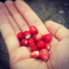 A handful of wild strawberries **Yum yum ** - I love walks through the forest after the rain! Raspberry, Strawberry, Wild Strawberries, Walks, Yum Yum, Rain, My Love, Summer, Food