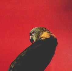 louise lawler: birdcalls