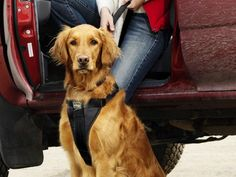 These dog travel accessories, discovered by The Grommet, are inspired by the founder's love for traveling with his dog and desire to keep them safe on the road.