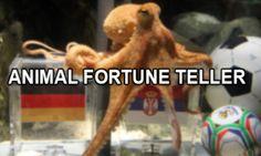 #Footballweek - Animal Fortune-Teller of #Football's Fate  #Prediction #Paul #psychic #khelkit