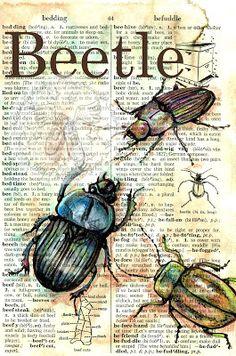 .. scarabées ..
