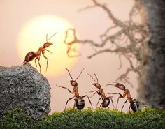 Action-Packed Ant Photography : Andrey Pavlov