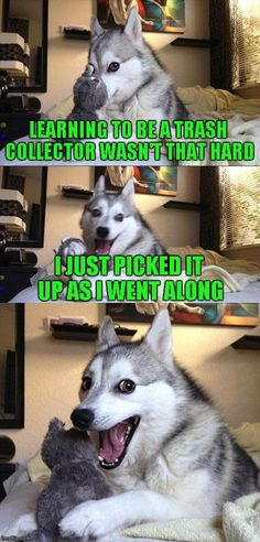 Bad Pun Dog | LEARNING TO BE A TRASH COLLECTOR WASN'T THAT HARD I JUST PICKED IT UP AS I WENT ALONG | image tagged in memes,bad pun dog | made w/ Imgflip meme maker