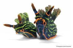 The colourful underwater world of Nudibranchs - Photograph by David Doubilet / Source National Geographic Weird Sea Creatures, Ocean Creatures, Alien Creatures, Beautiful Creatures, National Geographic, Especie Animal, Sea Snail, Snail Shell, Sea Slug
