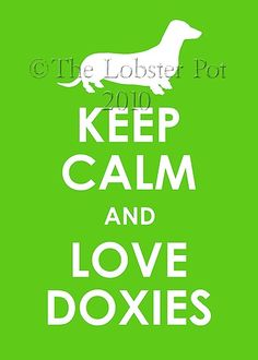 Doxies!  Gotta love it!!!