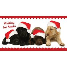 """Waiting for Santa: Cute photograph of four Labrador puppies, two black, one chocolate and one yellow, all wearing red Santa hats, in a row.The words 'Waiting for Santa' printed in top left of card. A red border on top and bottom of the card on a white background.  Message: """"With Best Wishes for Christmas and the New Year"""" Pack of 10 cards, 198mm x 102mm."""