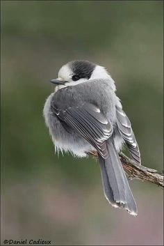 Hi! I'm the cutest bird you're gonna see today!