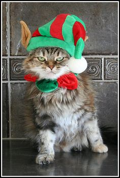 My disgruntled little Elf by SarahHuntPhotography on Flickr.