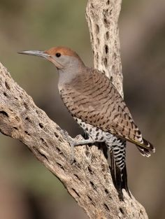 Beautiful Birds, Money Sign, Woodpeckers, Ground Floor, Opportunity, Insects, Turkey, Join, Fish