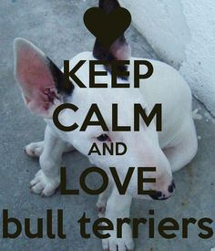 KEEP CALM AND LOVE bull terriers