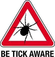 DeAnne's Tick-Borne Illness Prevention Tips Antibiotics For Acne, Rocky Mountain Spotted Fever, Deer Ticks, Tick Bite, Emotional Stress, Medical Billing, Flea And Tick, Lyme Disease, Invisible Illness