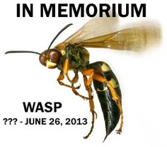 A sad day at the Johnston branch. Mr. Wasp found his way into our lending office and had to be dealt with.