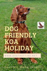 Dog Trotting | GLOBAL TRAVEL FOR DOG LOVERS