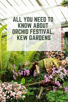 Kew Gardens celebrates Colombia and its diversity of Orchids in the Orchid festival Online Tickets, Buy Tickets, Picture Ideas, Photo Ideas, Kew Gardens, Garden Planning, Travel Pictures, Media Marketing, Orchids