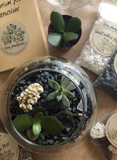 Create your own terrarium with this DIY kit. This terrarium kit is all natural and the perfect gift for any occasion. This kit includes everything you need to start and grow a terrarium - all packed up into a kraft box with handle. Send to someone you love for a surprise long distance gift. Terrariums Diy, Succulent Terrarium, Succulent Ideas, Succulent Gifts, Small Succulents, Planting Succulents, Terrarium Supplies, Terrarium Kits, Dish Garden