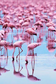 ⭐️Wishlist: taking photographs of flamingo's in their natural habitat. Aruba & Bonaire, Camargue (France). ⭐️