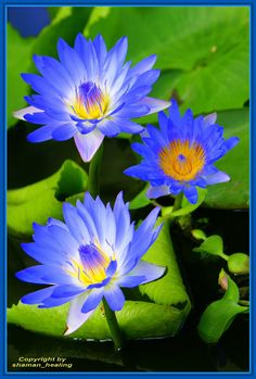 Blaue Schönheit 3/Blue Beauty 3/الأزرق الجمال 3
