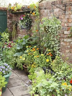 Containers to Maximize Landscape Small space between house and fence - ideal for small ledges, hanging plants.Small space between house and fence - ideal for small ledges, hanging plants. Small Courtyard Gardens, Small Gardens, Outdoor Gardens, Small Space Gardening, Garden Spaces, The Secret Garden, Pot Jardin, Garden Cottage, Hanging Plants