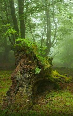 """Forest """"If I were a tree, I would have no reason to love a human."""" ― Maggie Stiefvater, The Raven Bo Magical Forest, Tree Forest, Mother Earth, Mother Nature, Beautiful World, Beautiful Places, Walk In The Woods, Fantasy Landscape, Natural World"""