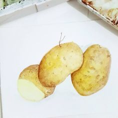 """29 Likes, 4 Comments - ARE (@anyonetea) on Instagram: """"Day 6. Potatoes. #worldwatercolorgroup #day6challenge #watercolor #watercolorfood…"""""""