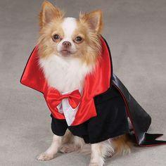 disfraz de angel para perro - Buscar con Google