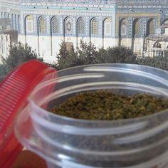 Za'tar from Palestine