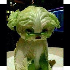 Lettuce Dog @BuzzFeed