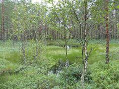 Dragonfly pond, Kõrvemaa Heath.