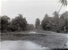 Irrigatiekanaal in het district Coronie, Suriname. Datum: Locatie: Coronie, Suriname Vervaardiger: Augusta Curiel Inv. Nr.:  gn-57/2-08 Fotoarchief Stichting Surinaams Museum