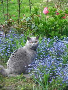 Helena's musings: A garden full of cats