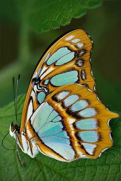 butterfly - Monteverde National Park, Costa Rica