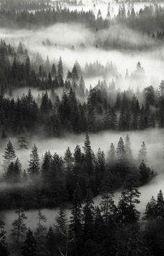 62 Ideas For Black And White Nature Photography Trees Mists Landscape Photography, Nature Photography, Yosemite Valley, Pretty Pictures, Beautiful Landscapes, Black And White Photography, Mother Nature, Mists, Beautiful Places