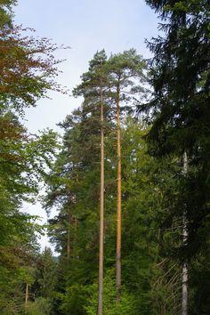 Woodland IMGP3046 by Biberius on DeviantArt