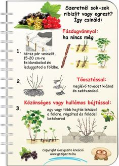 INFOGRAFIKÁK - gazigazito.hu Herb Garden, Vegetable Garden, Home And Garden, Medicinal Plants, Agriculture, Good To Know, Pergola, Projects To Try, Backyard