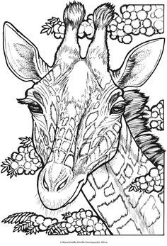 welcome to dover publications ch animal portraits adult colouring pagescoloring