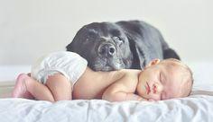 Gli animali domestici migliorano la salute dei neonati