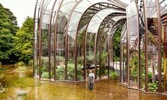 "'The purpose of the glasshouses is to grow and showcase the 10 ""botanicals"" used to flavour Bombay Sapphire gin.'"