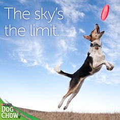 When you and your #dog #family are #healthy on the inside and out, you can achieve anything.