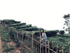 Kebun Teh Nglingo [Kulon Progo]