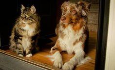 Co myslíte, může být kočka se psem ve shodě